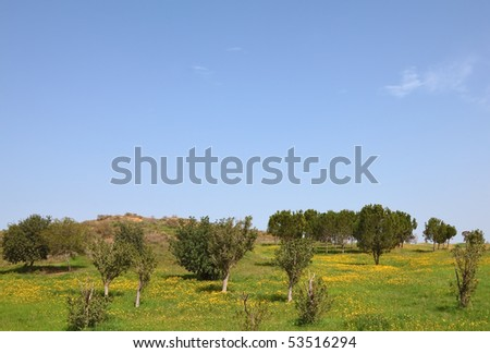 Blossoming rural fields in the south of Israel. Warm February
