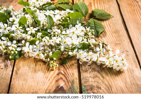 Blossoming spring blossoms on wooden background