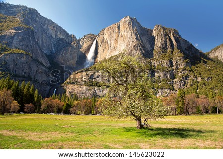 Blossoming tree in Yosemite meadow with the Upper and Lower Yosemite Falls behind.  - stock photo