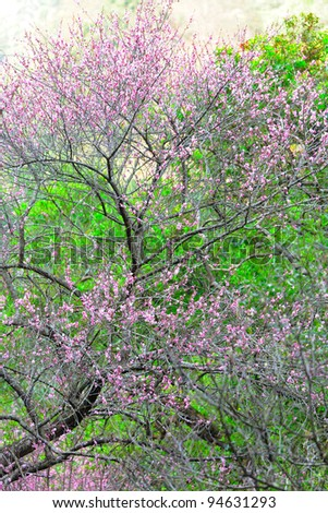 blossoms in forest at spring time - stock photo