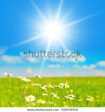 Blossoms of Daisies Field under the Sky - stock photo