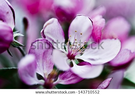 Blossoms on Tree - stock photo