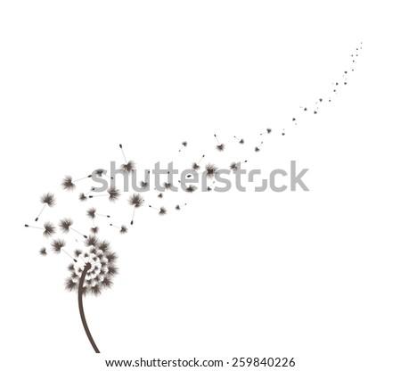 Blow Dandelion - stock photo