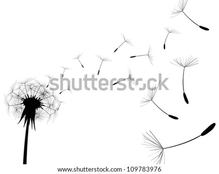 Blow Dandelion on white background - stock photo