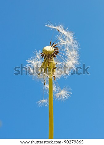 Blowball against the background of a blue sky - stock photo