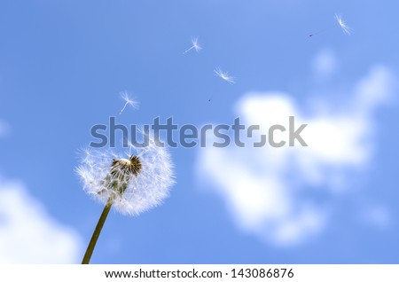 Blown dandelion on a blue sky.