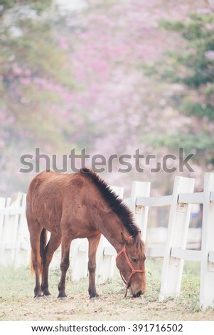 blown horse eating grass , pink tree background,film tone(with selective focus) - stock photo