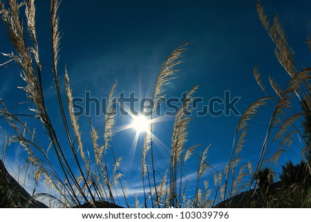 Blowy Grass Under The Sun - stock photo
