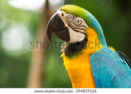 Blue-and-gold macaw in natural setting near Iguazu Falls, Foz do Iguacu, Brazil. - stock photo