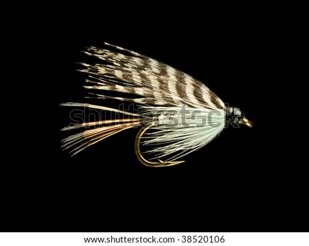 Blue and Orange Wet Trout Fishing Fly Isolated on Black Background - stock photo