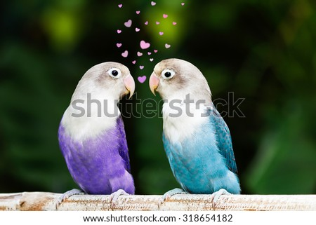 Blue and purple lovebird standing and flirting on the perch in the garden - stock photo