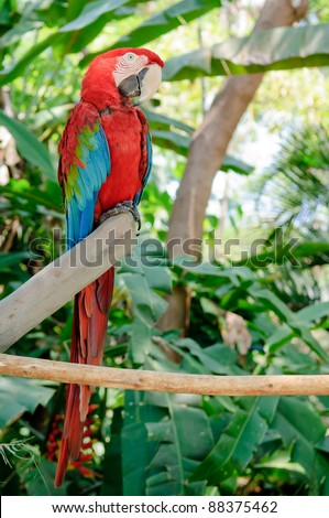 Blue-and-red parrot sitting on branch of the tree - stock photo