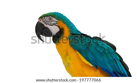 blue and yellow macaw,animal background