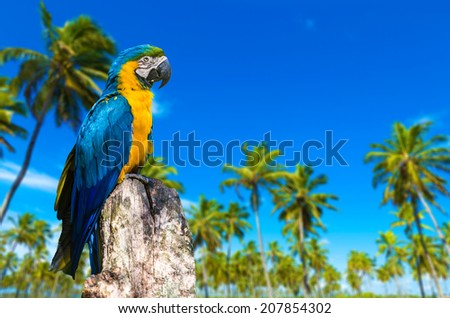 Blue and Yellow Macaw in Brazil - stock photo