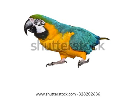 Blue and Yellow Macaw isolated on a white background. parrot.. isolated parrot
