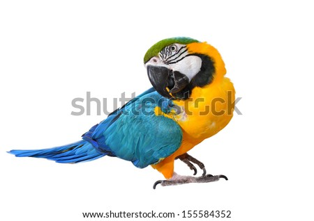 Blue and Yellow Macaw isolated on white