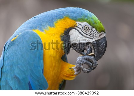 Blue and yellow parrot at Birds Park, Foz do Iguazu, Brazil