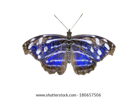 Blue-banded Purplewing butterfly isolated on white