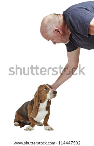Blue basset hound puppy with dog tags sits and looks up. Isolated on white background, vertical with copy space. - stock photo