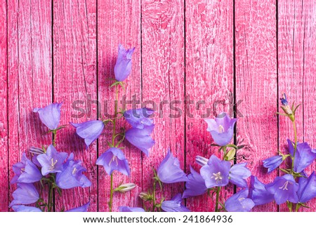 Blue bell flowers on a pink wooden background - stock photo