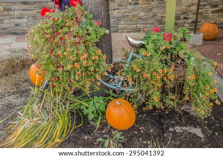 Blue bicycle almost buried under autumn flowers with pumpkins added for a great fall look. - stock photo