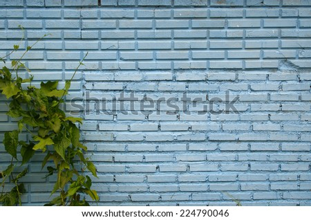 blue brick background and grass.