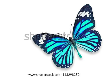Blue butterfly flying isolated on white background