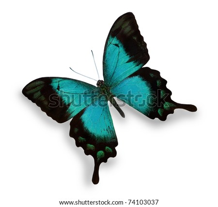 Blue butterfly isolated on white - stock photo