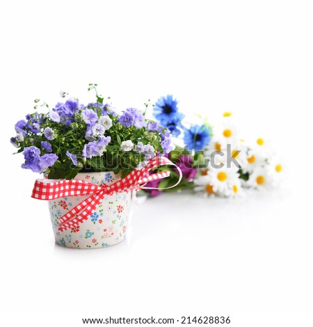 blue campanula flowers in  flower pot and other flowers - stock photo