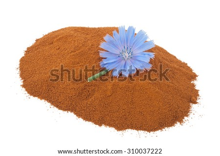 Blue chicory flower and powder of instant chicory - stock photo