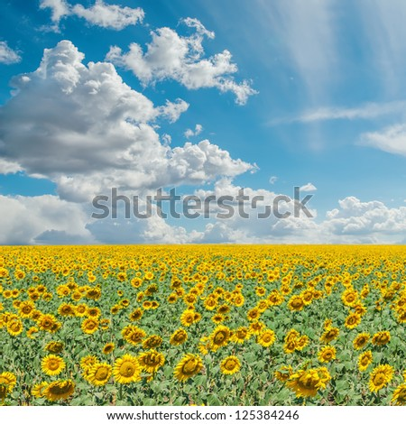 blue cloudy sky and field with sunflowers - stock photo