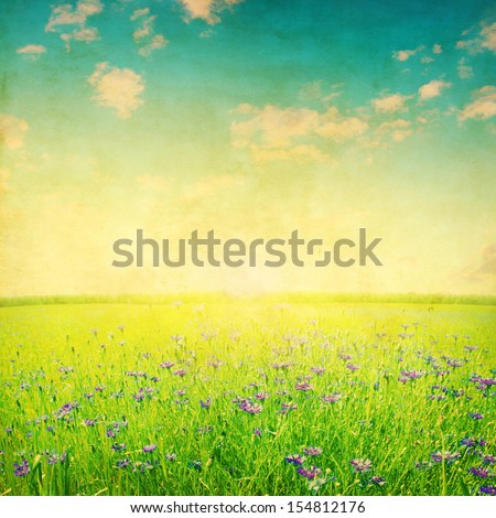 Blue cornflower field at sunset in grunge and retro style.. - stock photo