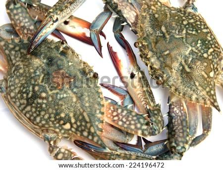 Blue crab isolated on white background - stock photo