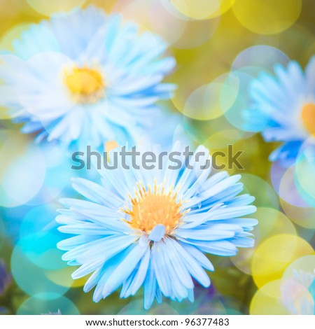 Blue daisy flowers over green defocused natural background in sunny day. Selective focus. Postcard - stock photo