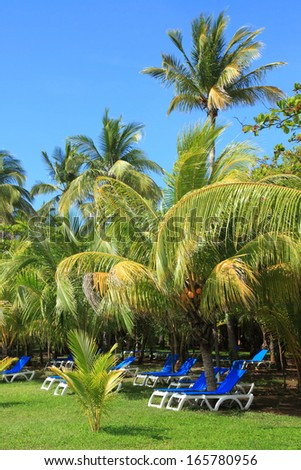 blue deck chairs on the lawn under the palm trees