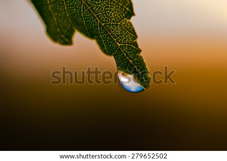 Blue dew drop hanging at the end of the leaf in the sunlight.It is clear leaf structure.Blurred background varies from light brown to dark brown - stock photo
