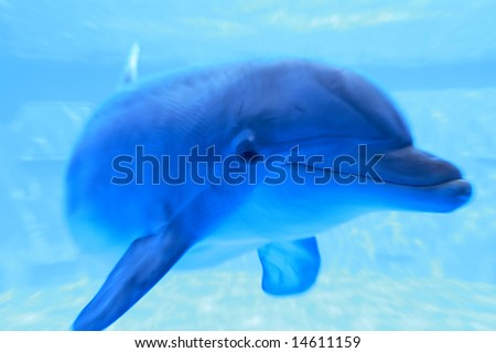 blue dolphin underwater swimming and looking at us, great wildlife background - stock photo