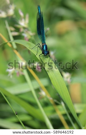 Blue Dragonfly in the garden