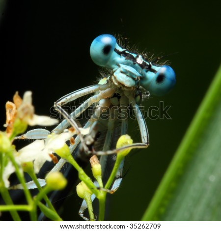 Blue dragonfly on a flower - funny portrait - stock photo