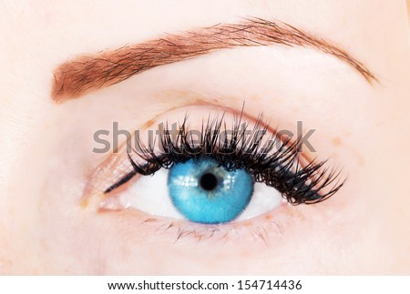 blue eye with bushy lashes and brow close up picture - stock photo