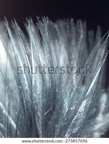 blue feather on a black background. close-up - stock photo