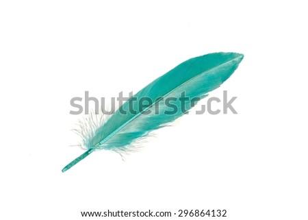 blue feathers on white background. - stock photo