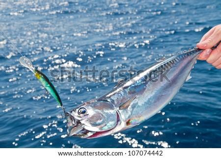 Blue fin tuna Mediterranean big game fishing - stock photo