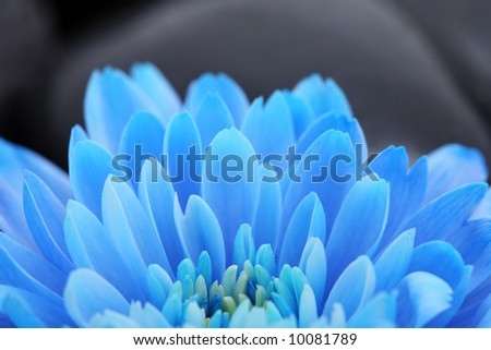 blue flower background abstract detail bloom