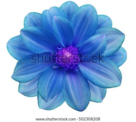 Blue flower garden white isolated background stock photo royalty blue flower garden white isolated background stock photo royalty free 502308208 shutterstock mightylinksfo