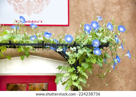 Blue flowers adorning a gallery doorway entrance in Santa Fe, NM - stock photo