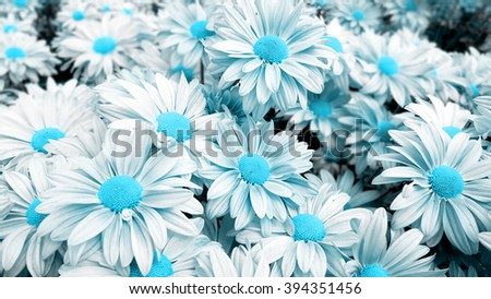Blue flowers background. Flowers Wallpapers.