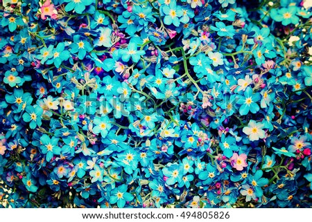 Blue Flowers Background. Forget-me-not Flowers