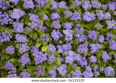 Blue flowers in garden on a summer day