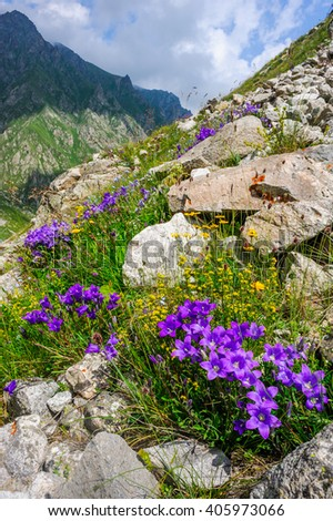 Blue flowers in the mountains - stock photo